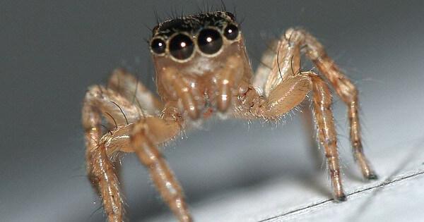 9 astuces naturelles pour lutter contre les araign es de for Astuce contre humidite maison