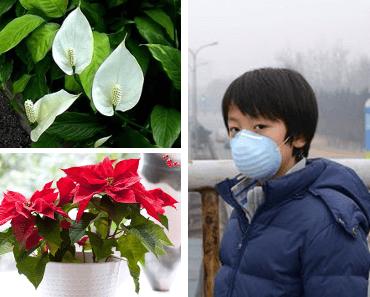 plantes d'intérieur qui purifient l'air