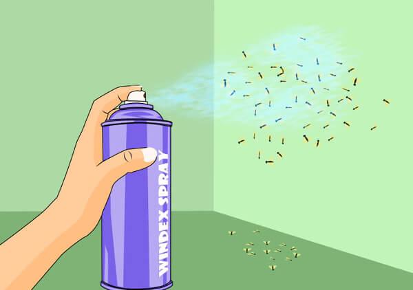 spray maison moucherons