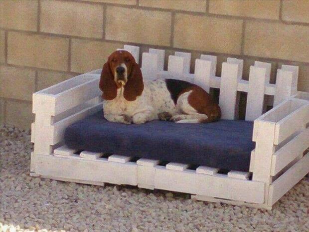 Un canapé pour chien