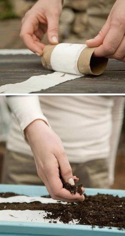 Rouleau de papier toilette pour planter vos semis