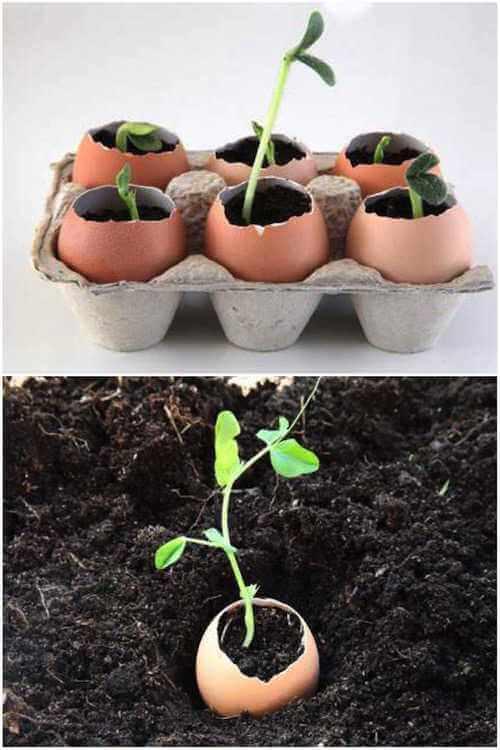 Planter ses semis dans des coquilles d'œuf