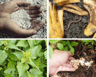 6 engrais naturels et gratuits faciles à faire pour son jardin