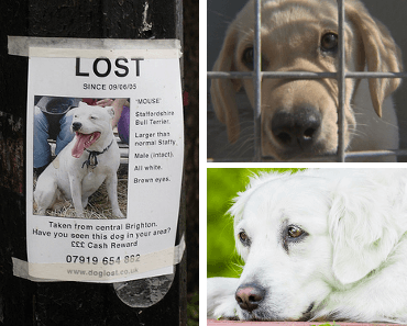retrouver chien perdu