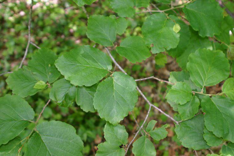 naturealpha