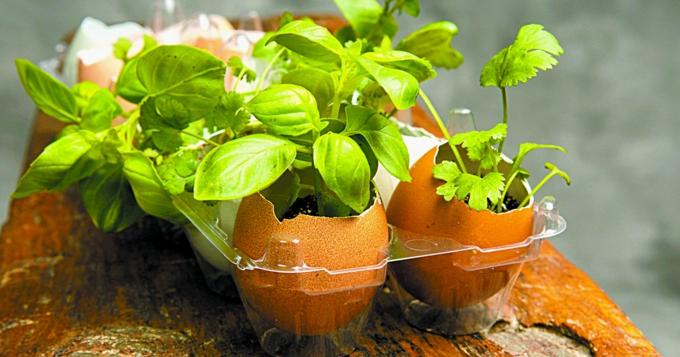 Obtenir des plants de semis