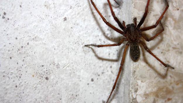 anti araignée