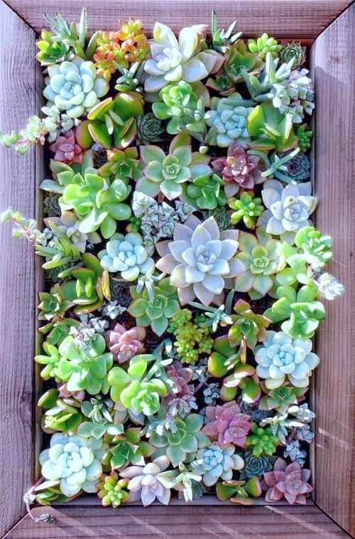 encadrement en bois succulentes