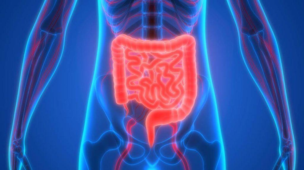 thym-digestion