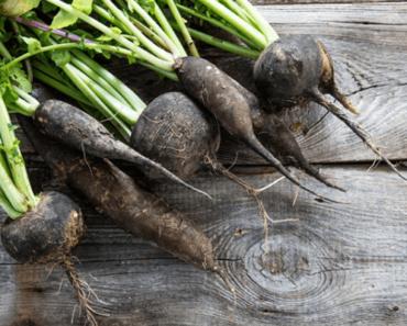 radis noir racines
