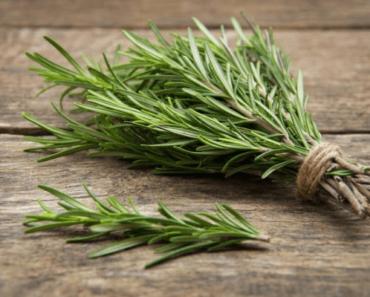romarin-herbes