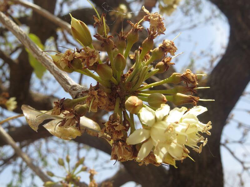 karite-fleurs