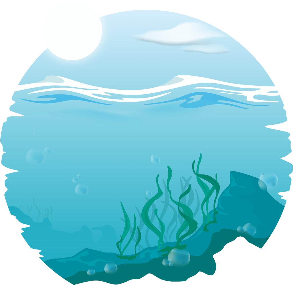 algues-marine