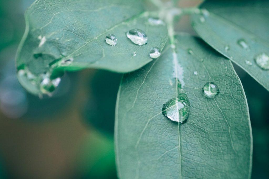 sel-d'epsom-plante-verte