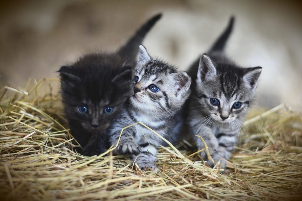 trois-chatons