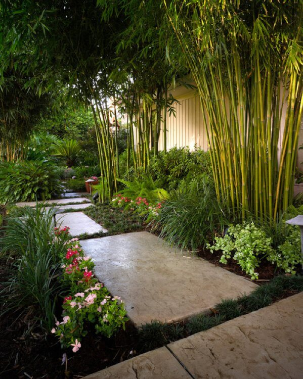 Bambou-exterieur
