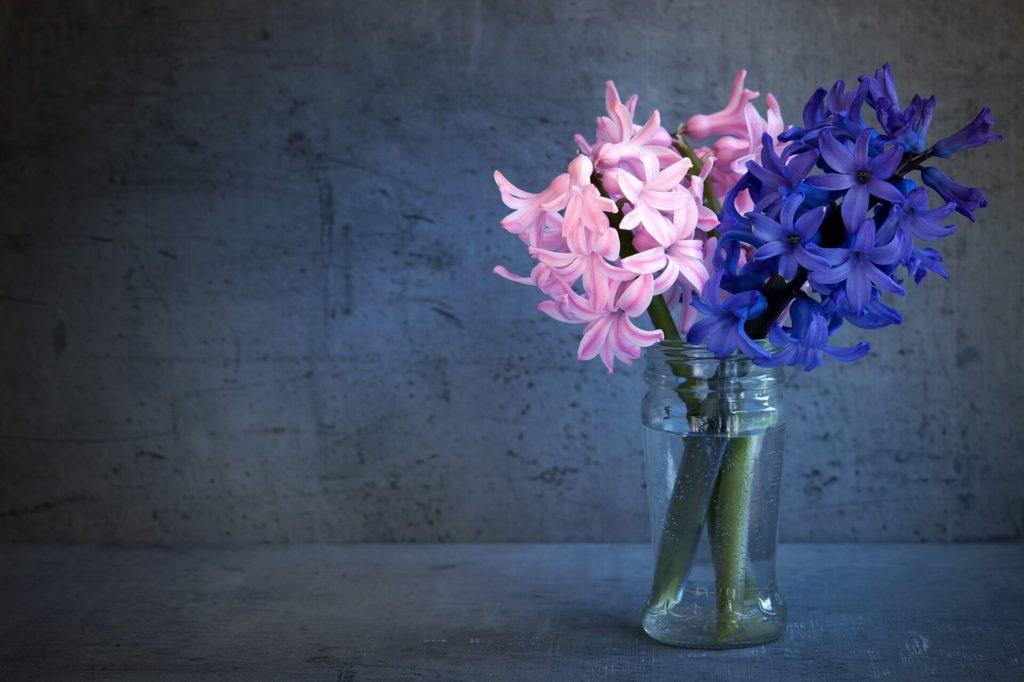 Jacinthe-fleur